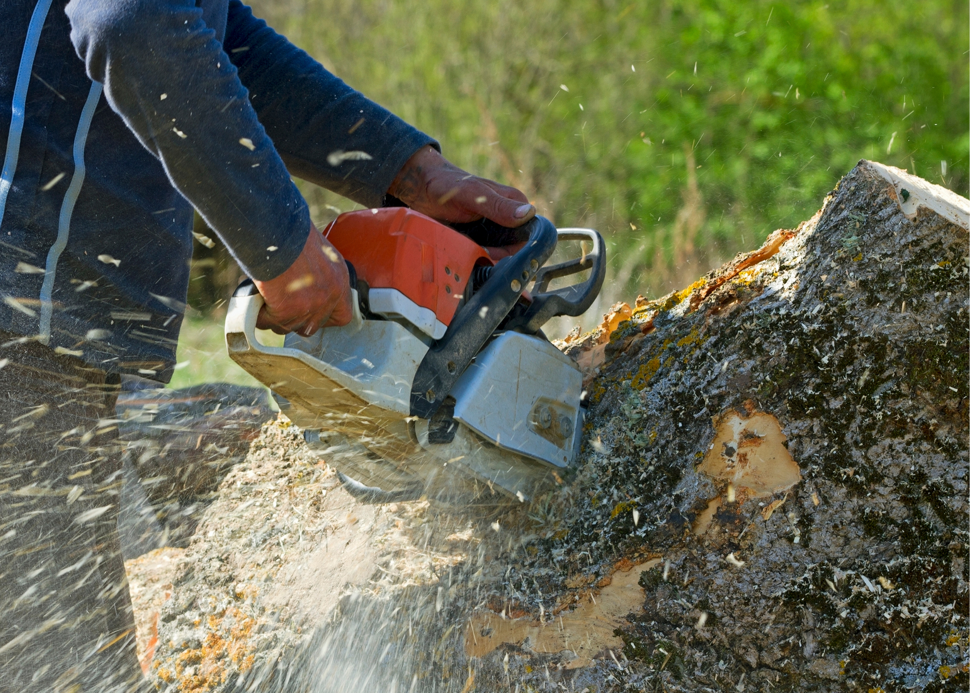 tree trimming service Fort Wayne IN