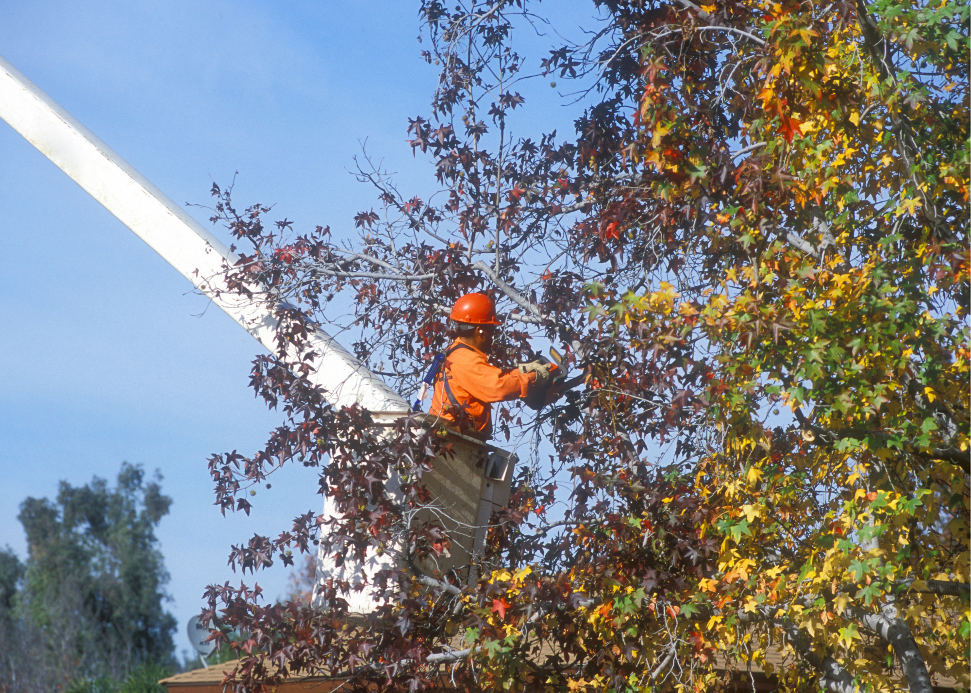 tree trimmers Fort Wayne